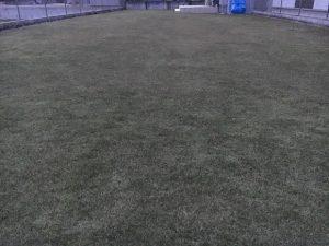2016年11月26日の裏庭の芝生。グリーンウェイの散布後。少し低めの目線。