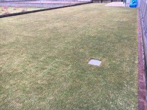 2016年11月27日。グリーンウェイ散布の翌朝の裏庭の芝生。