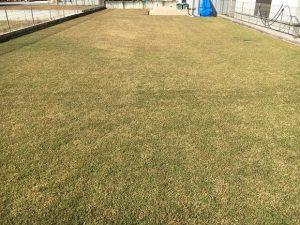 2016年11月5日の秋晴れの裏庭の芝生。