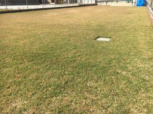 2016年11月5日の秋晴れの裏庭の芝生。少し低めの目線。