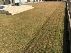 2016年11月12日の裏庭の芝生。TM9の穂刈り前。