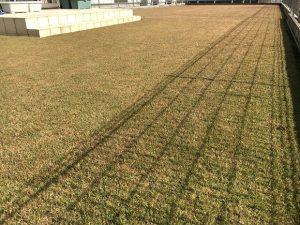 2016年11月12日の裏庭の芝生。TM9の穂刈り前。少し低めの目線。
