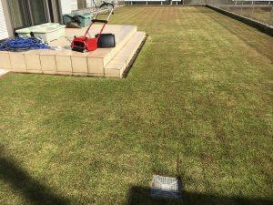 2016年11月12日の裏庭の芝生。TM9の穂刈りの後。