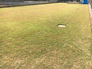 2016年11月12日の裏庭の芝生。TM9の穂刈りの後。少し低めの目線。
