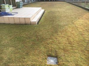 2016年11月20日の朝の裏庭の芝生。