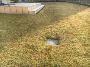 2016年11月20日の朝の裏庭の芝生。少し低めの目線。