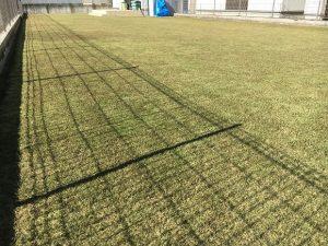 2016年12月3日の裏庭の芝生。少し低めの目線。