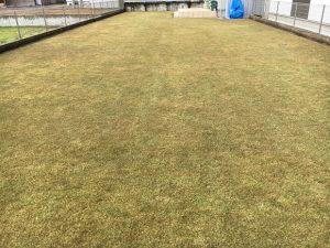 2016年12月23日の裏庭の芝生。