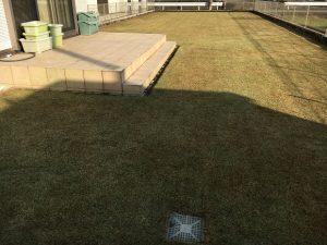 2017年1月1日の裏庭の芝生。