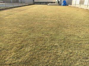2017年1月1日の裏庭の芝生。少し低めの目線。