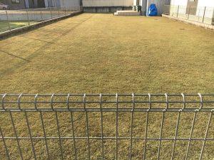 2017年1月1日の裏庭の芝生。通行人目線。